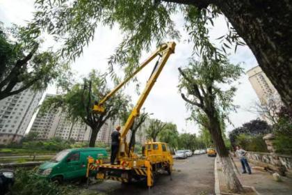 """李沧区为200余株柳树进行""""重剪""""消除安全隐患"""