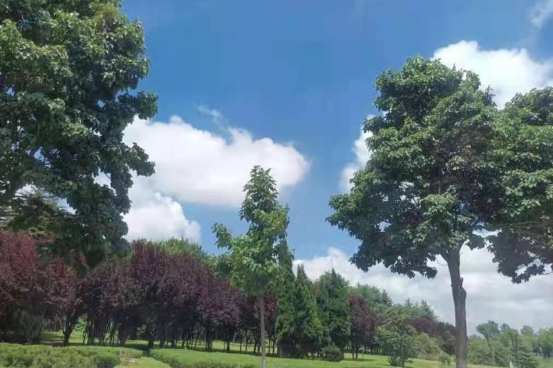 莱西市出台生态考核补偿新办法 助力大气环境质量改善