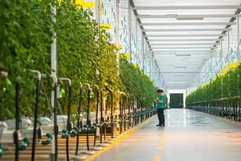 """青岛莱西:深化拓展""""莱西经验""""打造农民就业创业新高地"""